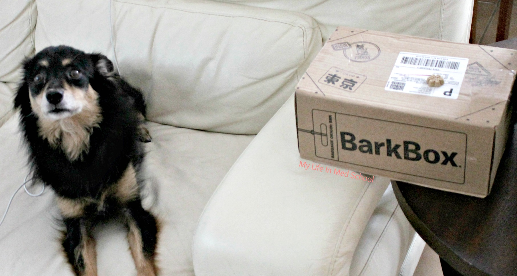 bella-with-her-barkbox