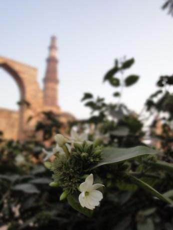 Qutub complex, Delhi, January 2013
