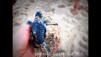 Byebye baby turtles! Until your mating day comes...