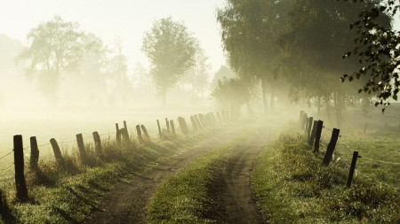 trees_road_fog_fence_morning_stakes_26384_1920x1080-450x253