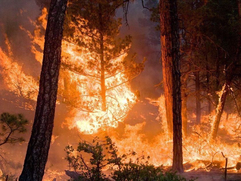 boschi-bruciano