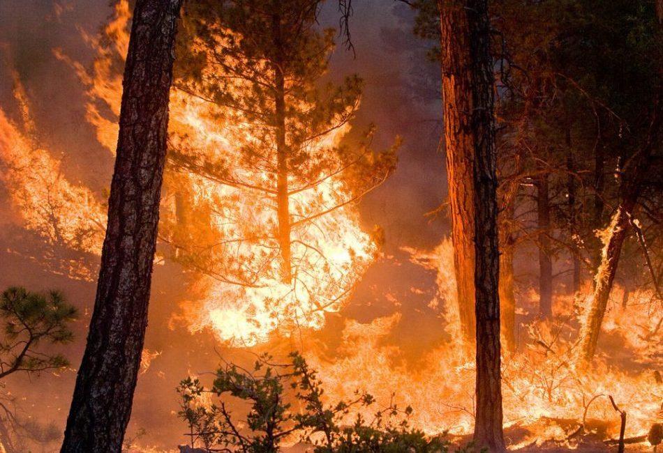 I boschi bruciano ed è colpa di ognuno di noi