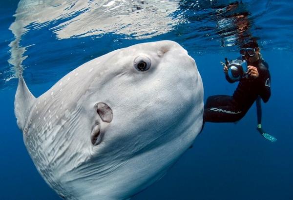 avvistamento-cetacei-pesce-luna