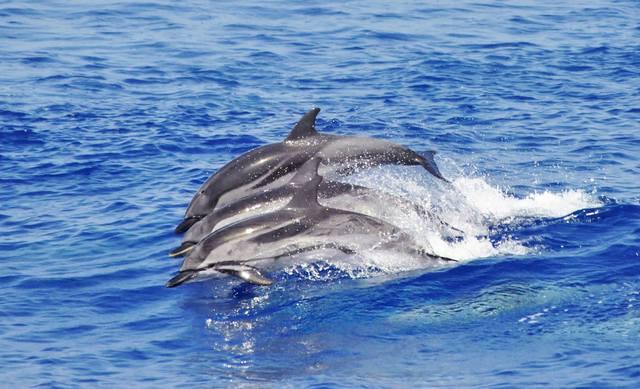 avvistamento-cetacei-liguria