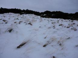 hillend-jan201311