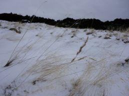hillend-jan201312
