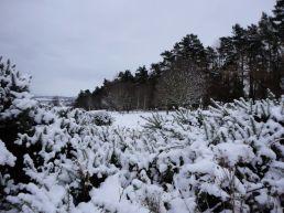 hillend-jan201314