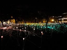 field-of-lights2