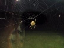 Hagrid the pet spider