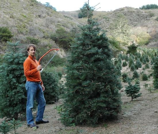 man-cutting-down-christmas-tree copy