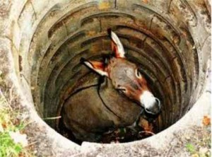 Image result for a donkey stuck in a well