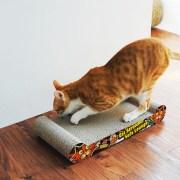Cat-scratcher-cat1