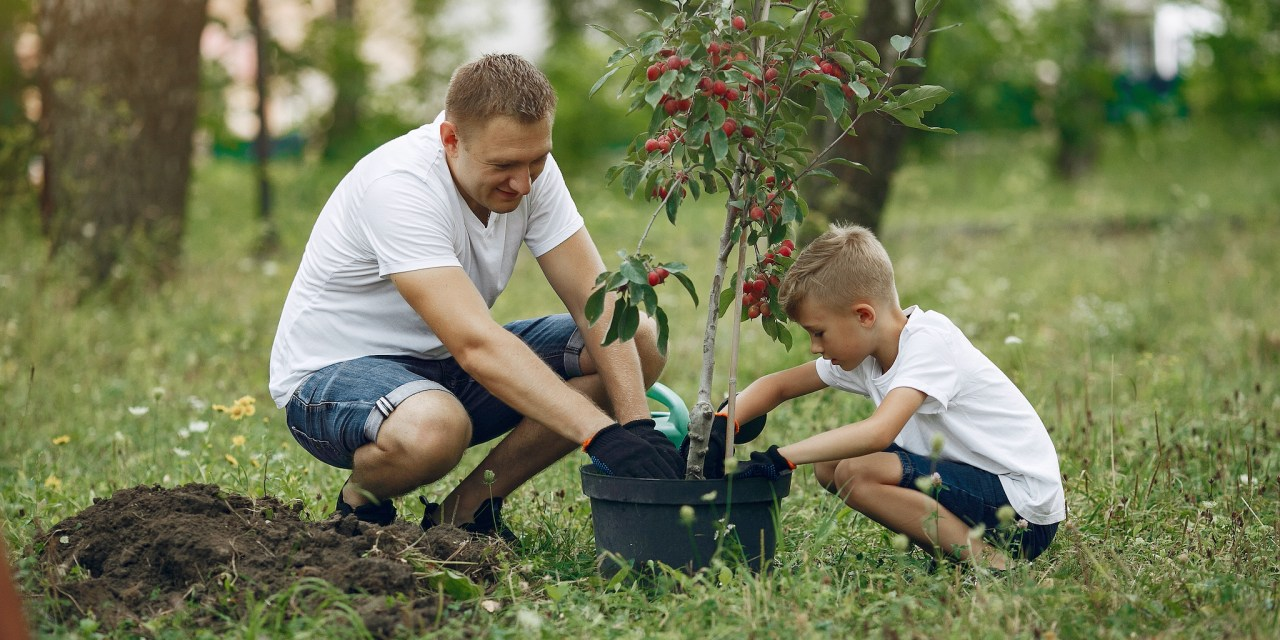 DEC Announces Annual Tree and Shrub Seedling Sale