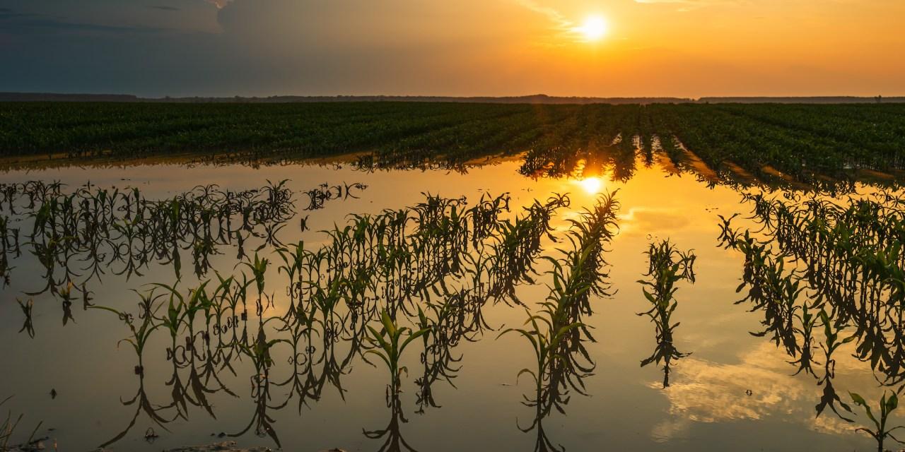 Shumer & Gillibrand announce USDA approved natural disaster designation