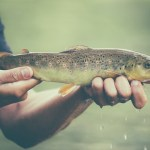 DEC Announces New York's Trout and Salmon Fishing Season Opens April 1