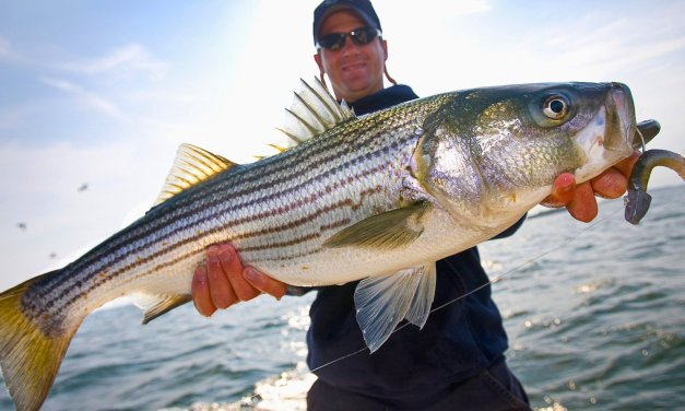 DEC announces start of 2021 Striped Bass Season