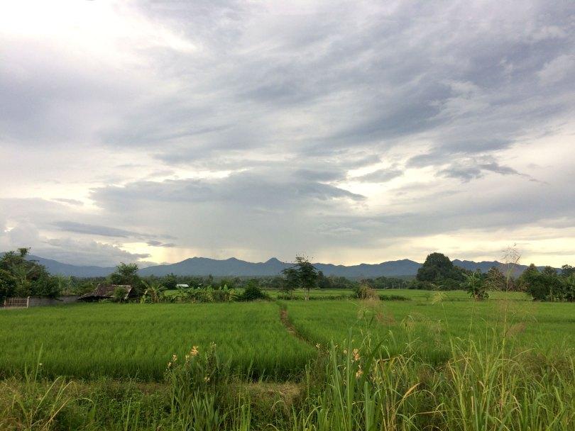 route chiang mai rizière