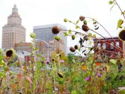 Urban Garden with Rutgers Law School in Background