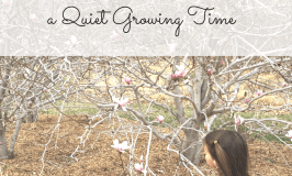 Reflections on a Quiet Growing Time