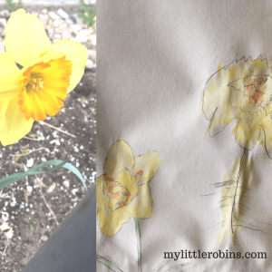 Daffodil nature journal entry
