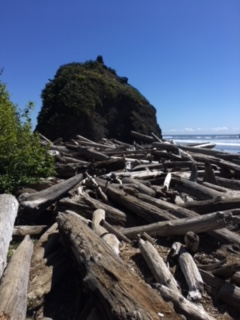 End of the hiking trail. This is the driftwood you have to climb across to get to the Beach.