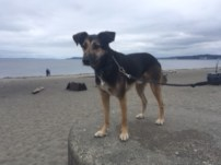 Argo on Alki Beach. mylocalcollaborative.com