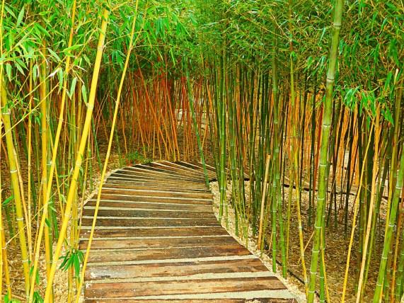 Labirinto de Bambu