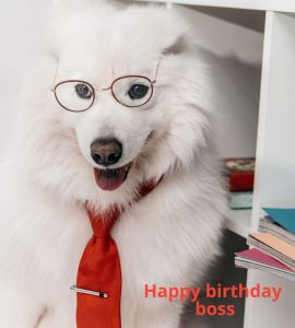 70 Funny Happy Birthday Wishes for Your Boss