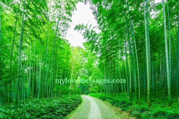 Bamboo Quotes And Saying With Caption for Instagram
