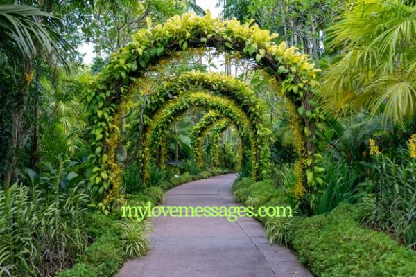 Inspirational Garden Quotes And Caption for Instagram