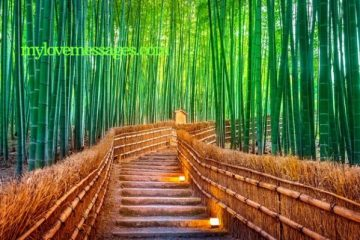 Inspirational Bamboo Quotes And Caption for Instagram