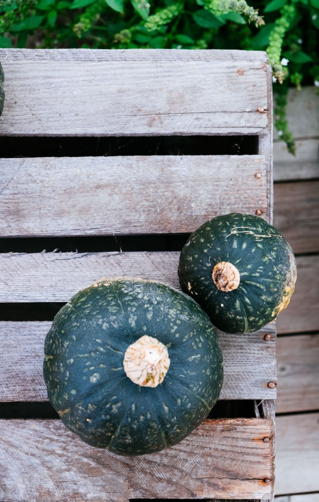 groene pompoenen