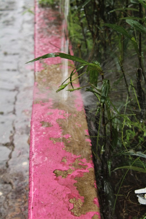 Rain pours onto a pink wall and a plant in old Accra.