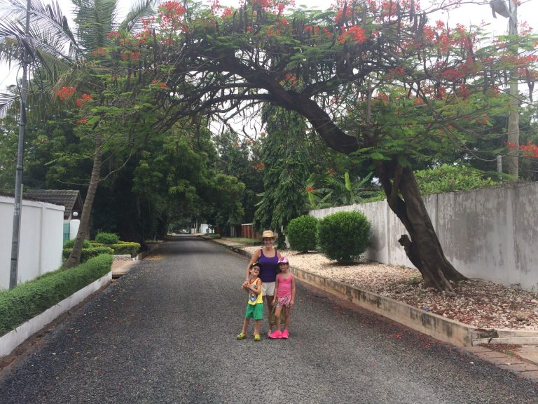 A pretty flame tree in our street in Accra Ghana.