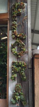 mml fg succulent letters