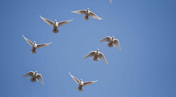 notice-birds-flying