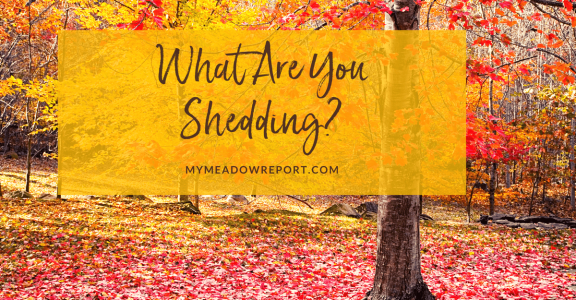 shed what you've outgrown