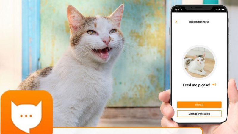 Kedilerin Miyavlamalarını Tercüme Eden Uygulama MeowTalk - www.dergikafasi.com