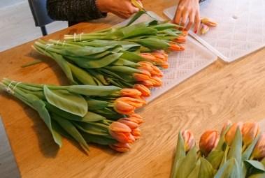 TulipTea10
