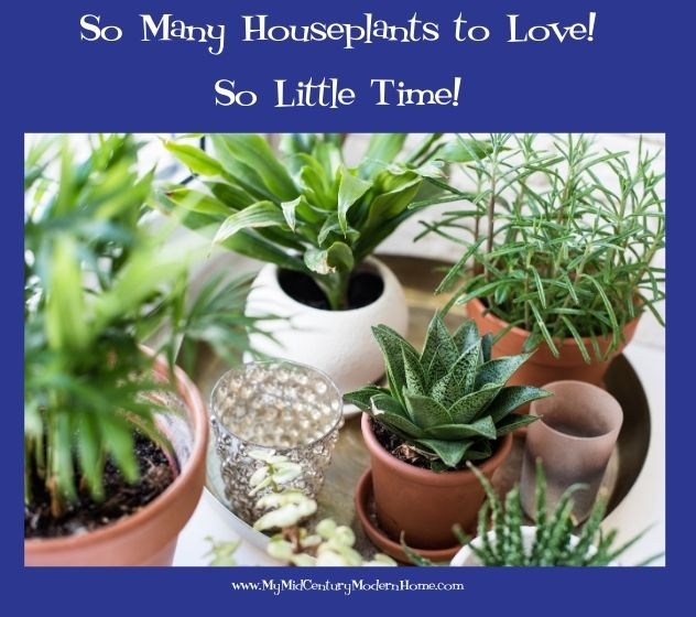 You Can Never Have Too Many Houseplants