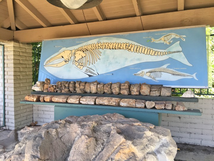 Whale Fossil Site Mission Viejo