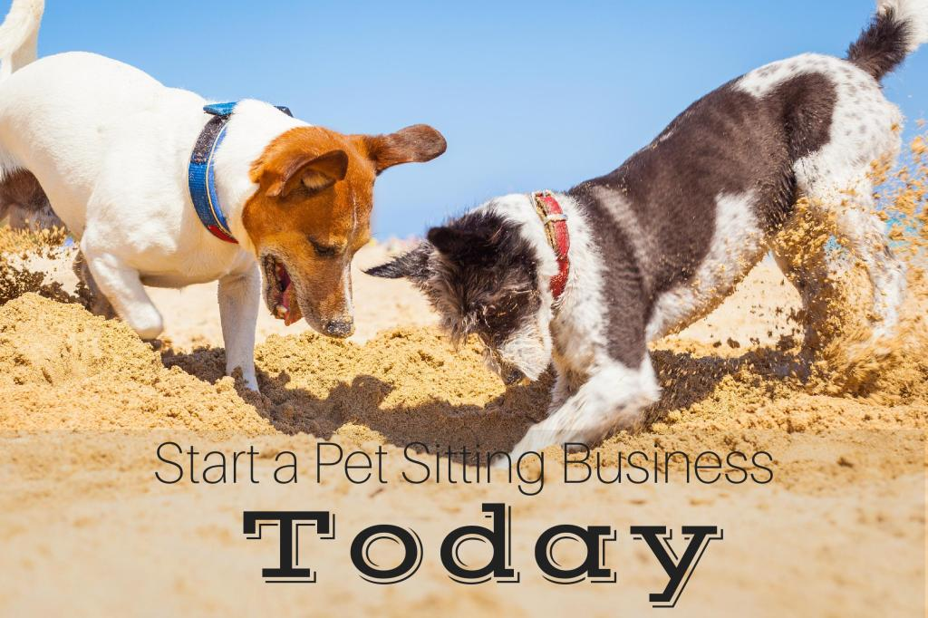 How to Start a Pet Sitting Business Today