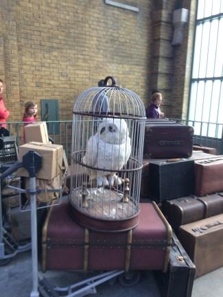 Hagrid waiting to ride to Hogwarts