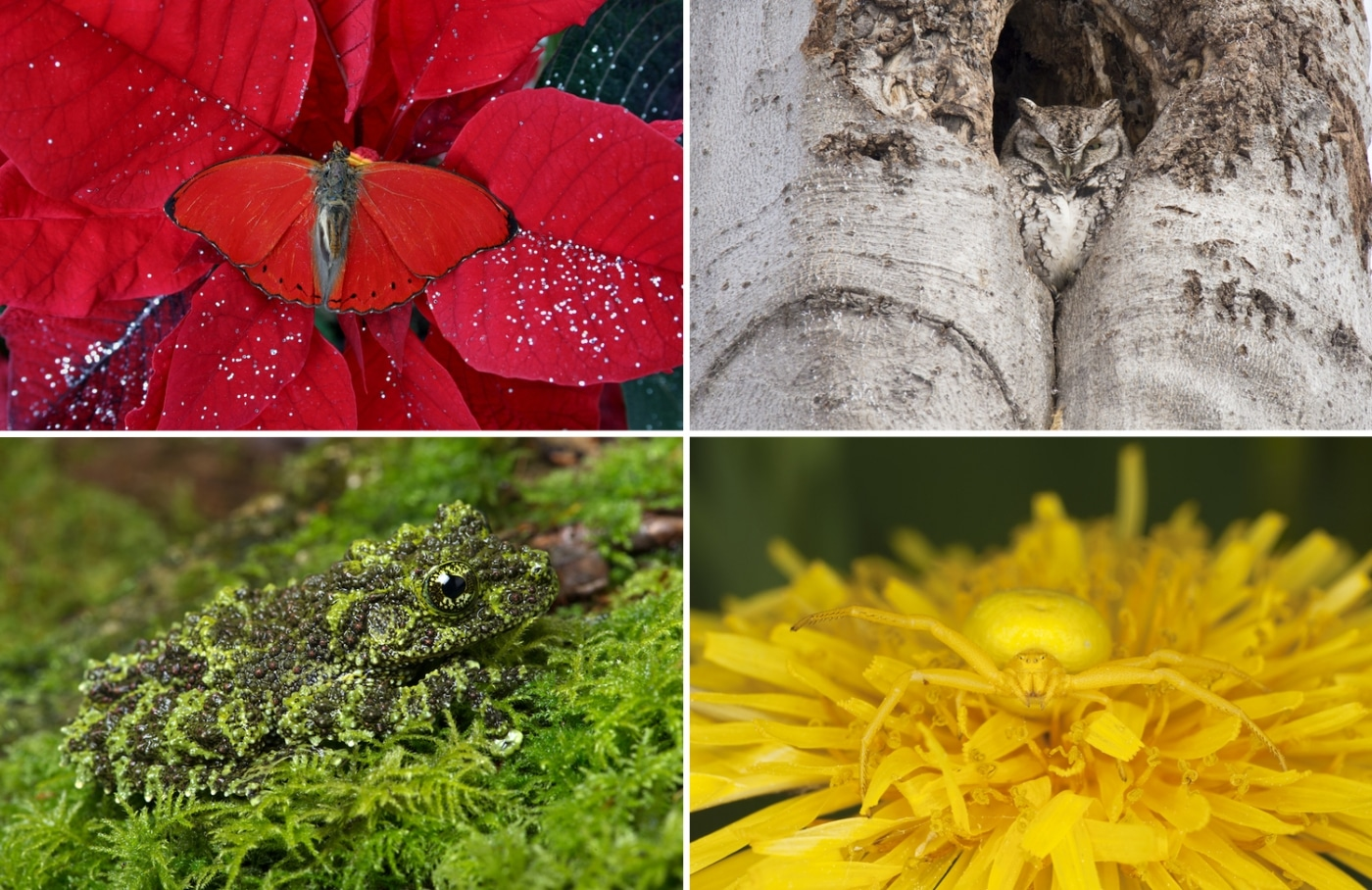 20 Animals Who Have Perfected The Art Of Camouflage