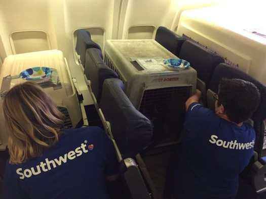 Southwest Airlines Shelter Animals Hurricane Harvey Helen Woodward Animal Shelter