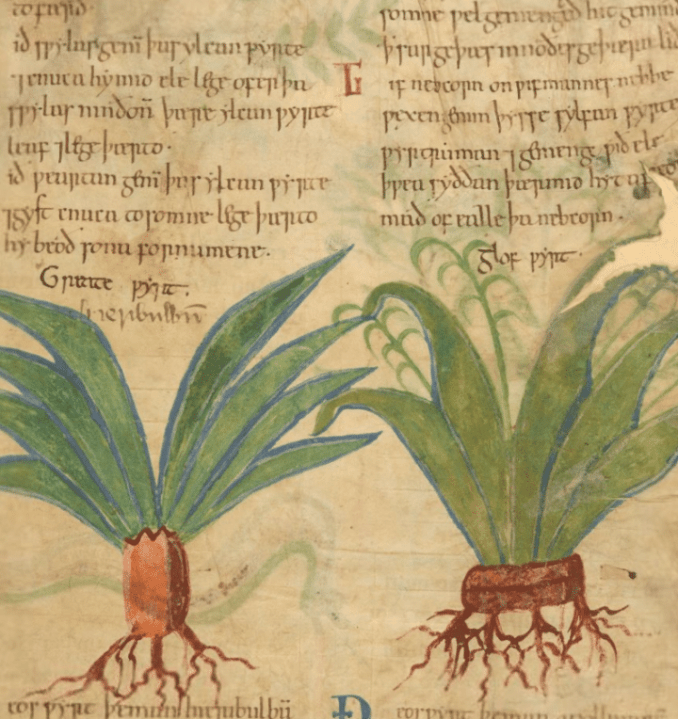 Medieval Herbal Remedies Online