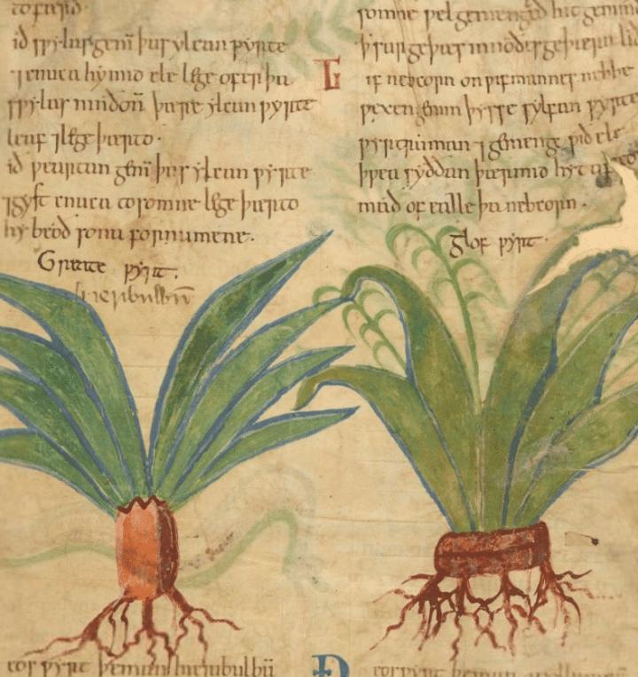 Medieval Herbal Remedies Online