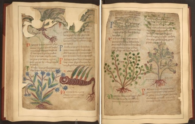 medieval herbal medicine british library