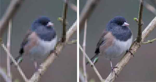 Photo Enhancing Software Turns Low-Res Images into High-Res
