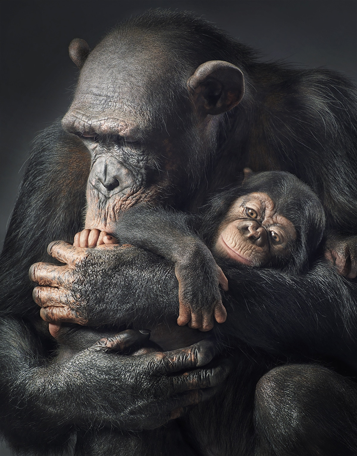 Most Endangered Animals by Tim Flach